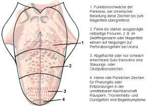 Seminar Zungendiagnose Berlin
